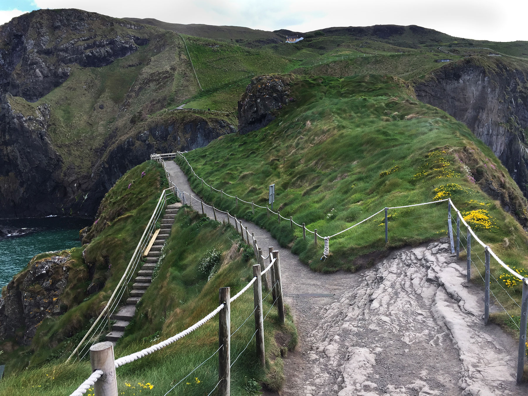 image of carrick a rede rope bridge in northern ireland, must see, stunning views, national trust, best coastal walks, county Antrim, Ireland, near Giant's causeway world heritage site, travel review by aunoralurra, aunoralurra, suggestions on places to see, razorbill bird, kittiwake